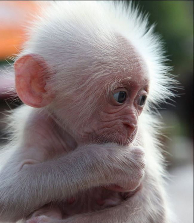 U svijetu majmuna