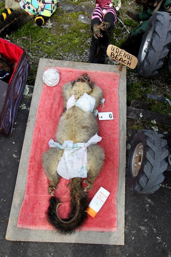 U takmičenju Novi Zeland ljepote među mrtvima oposuma