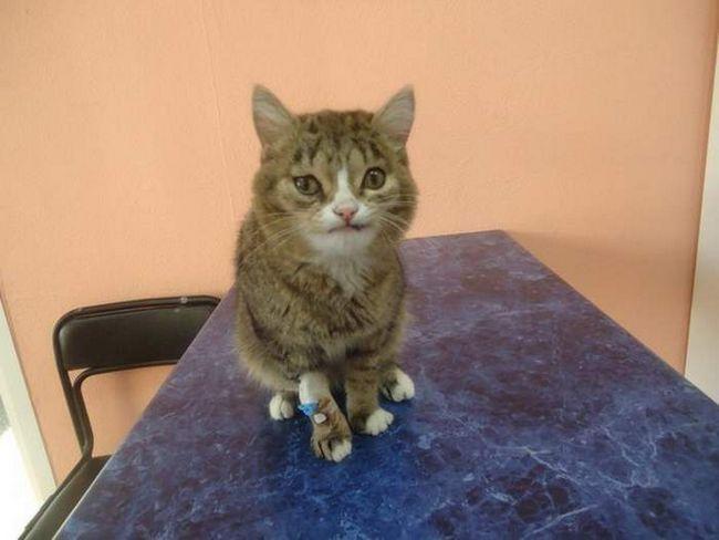 В Новосибирске спасли необычного кота.