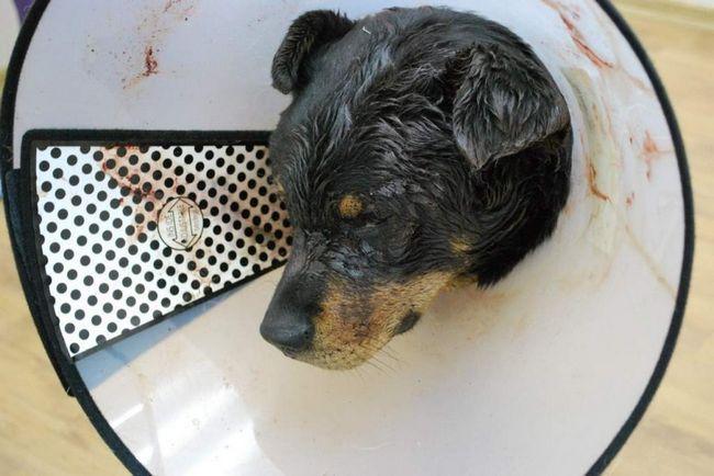U Novosibirsku, pretučen pas.