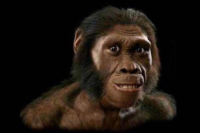В оаэ обнаружили останки самой древней обезьяны