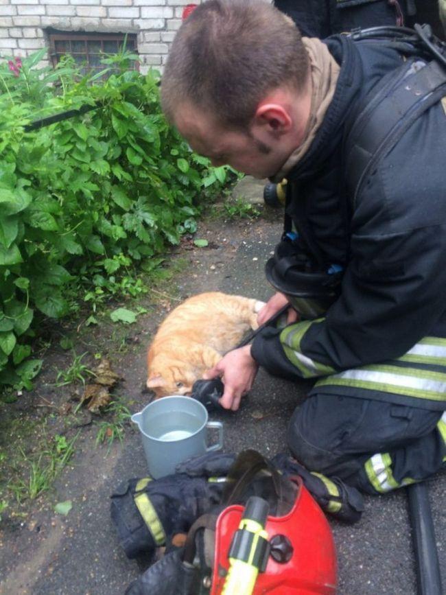 Подышавший кислородом и напоенный водой кот пришел в себя и вернулся в квартиру.