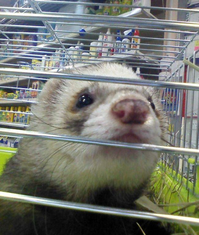 Prodavnicu kućnih ljubimaca Peter zavarene živih životinja.