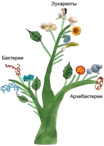 Tražim predak svih živih organizama