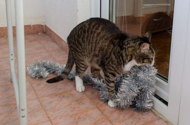 Не у всех новогодние праздники проходят удачно, не повезло и этому хвостато-усатому бедолаге!