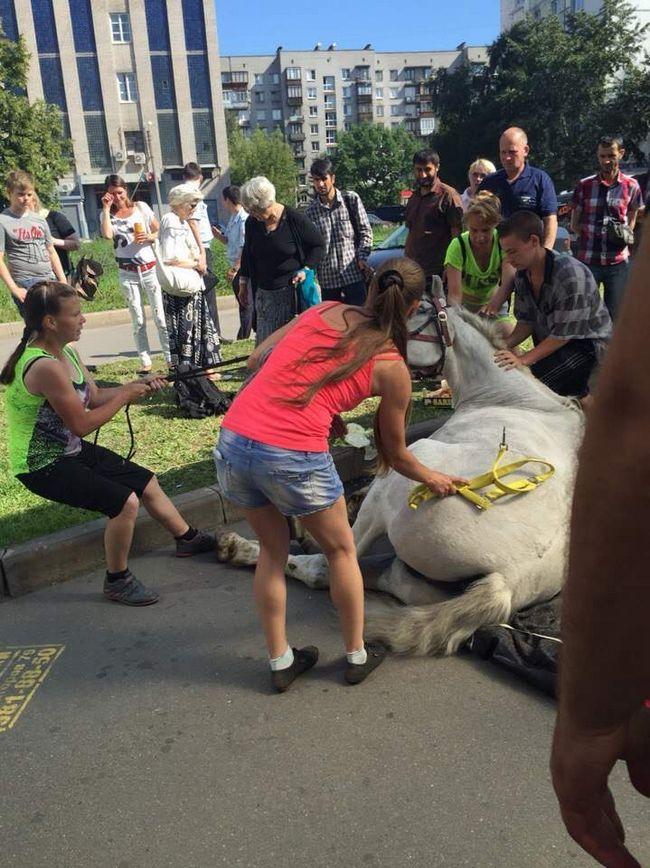 U Sankt Peterburgu, od vrućine se onesvijestila konja.