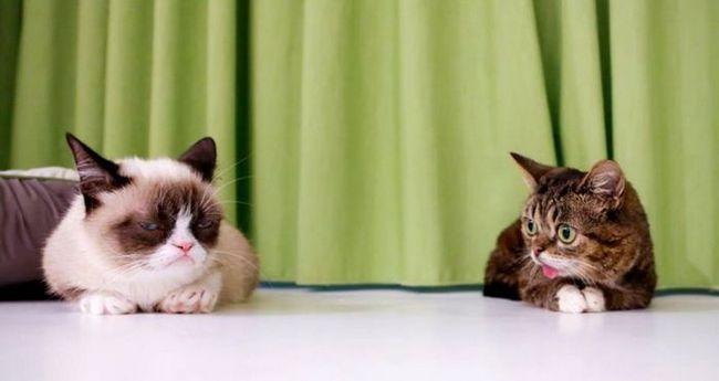 В сети состоится премьера фильма о знаменитых кошках