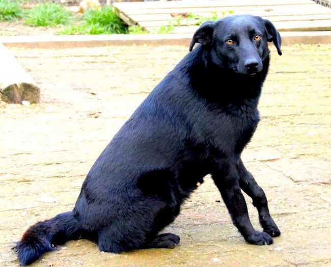 Pas spasio dječaka u Sjedinjenim Američkim Državama.