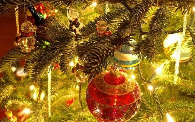 В вашей новогодней ёлке обитает, по крайней мере, 10 000 незваных гостей