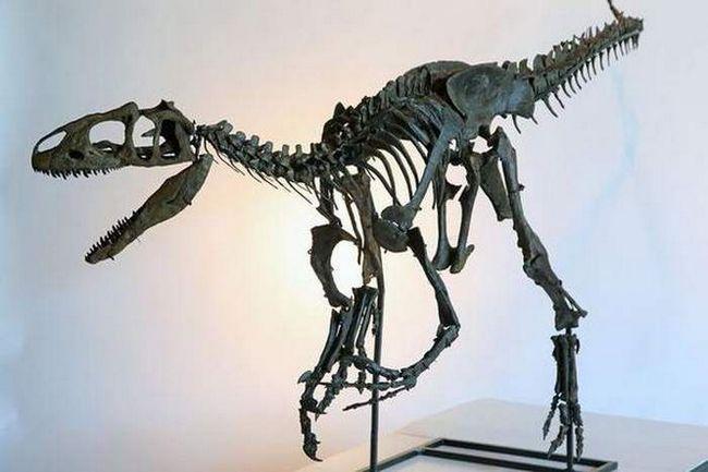 Allosaurus kostur prodan na aukciji.