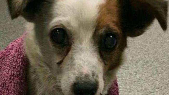 U Velikoj Britaniji, pas vratio vlasnicima 5 godina nakon otmice