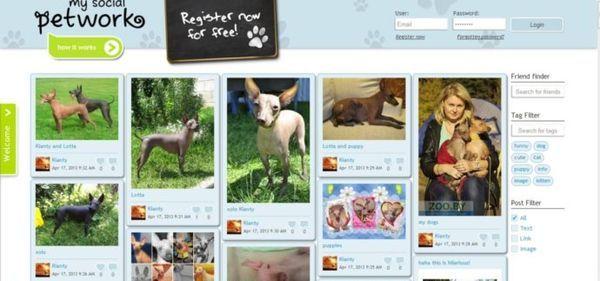В великобритании создали социальную сеть для домашних животных