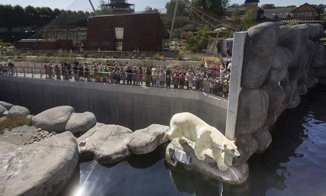 U Kopenhagenu, čovjek spašena iz polarnog medvjeda.