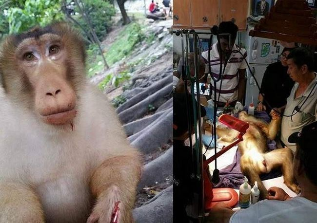 Monkey hodil petardu v balíčku s občerstvením.