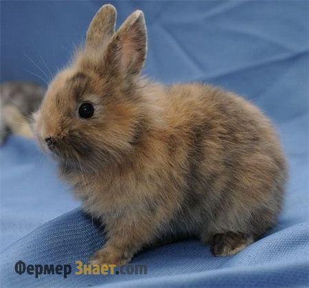 Актуальные вопросы ухода за декоративными кроликами