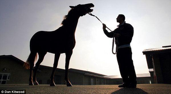 Ведущая клиника мира для лошадей