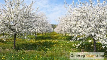 Весеннее обрезание деревьев — делаем правильно