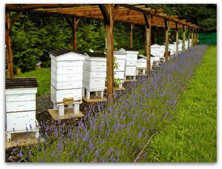 Veterinarsko-sanitarne pravila pčele sadržaj