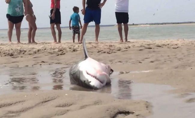 U SAD-u, plaže turisti spasili bijela psina.