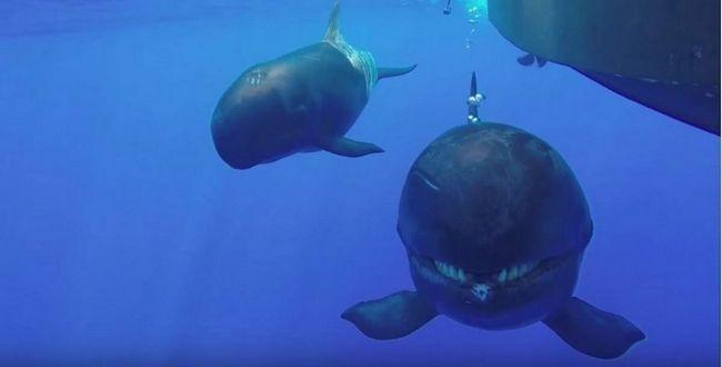 Orca s úsměvem do kamery.