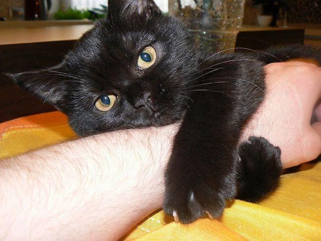 Владельцы кошек застенчивые одиночки, говорят ученые