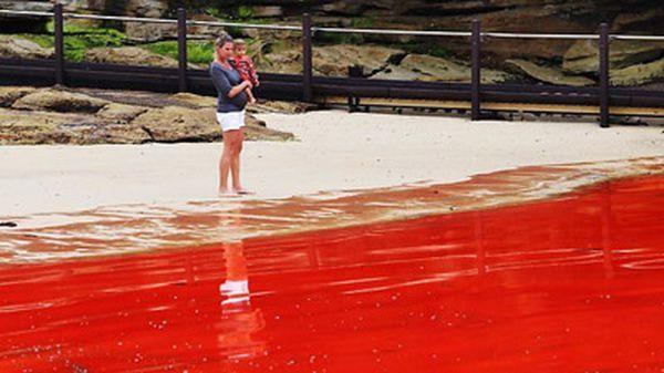 Vlasti ne preporučujemo da idu u vodu u periodu cvetanja (foto: news.com.au)