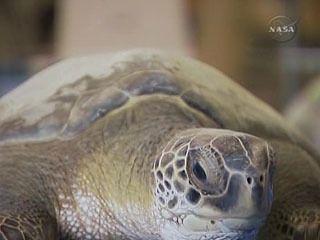Žalba kaže vozačima, ako put puzeći kornjača