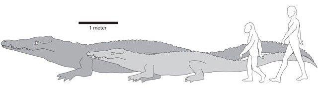 Usporedba veličine Crocodylus thorbjarnarsoni i moderan krokodil, čovjek drevnog i trenutne osoba