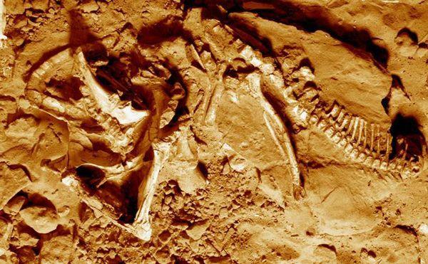 Впервые рядом с останками протоцератопса обнаружен его след