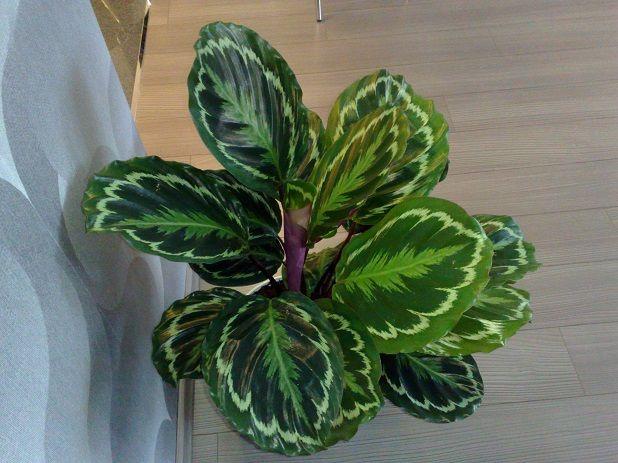 Štetočina i bolesti sobne biljke