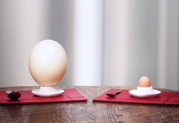 Kuhana piletina i nojeva jaja