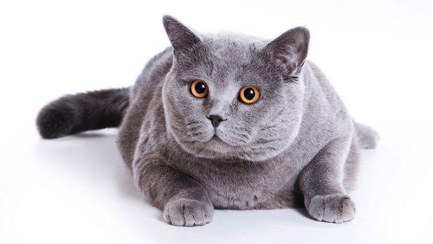 Выбираем миску для кошек