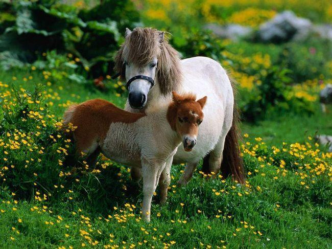Izbor ponija - odgovorno i dugoročno poslovanje.