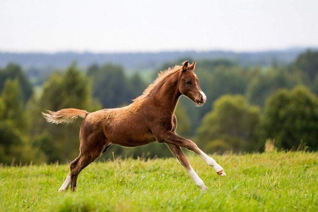 Velški ponija za djecu koja žele naučiti jahati.