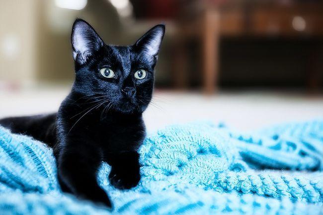 Выделения из матки у кошки