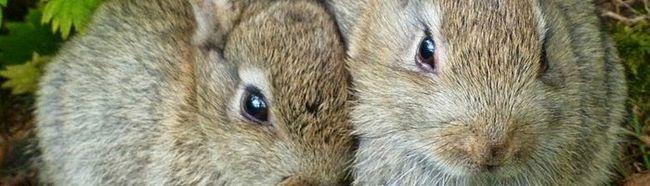 Выращивание кроликов в домашних условиях — советы и рекомендации