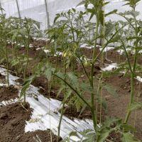 Выращивание овощей под пленкой