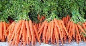 Высадка моркови – подготавливаем семена и грунт правильно!