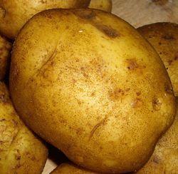 Vysoce výnosných odrůd brambor