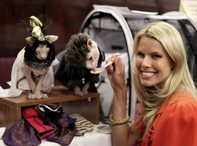Cat Show Algonquin mačka Fashion Show 2010. godine.