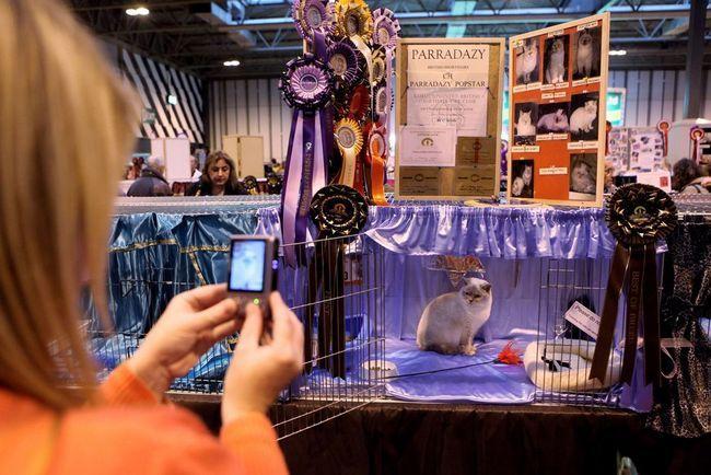 Cat Show (Upravnog vijeća Cat Fancy)
