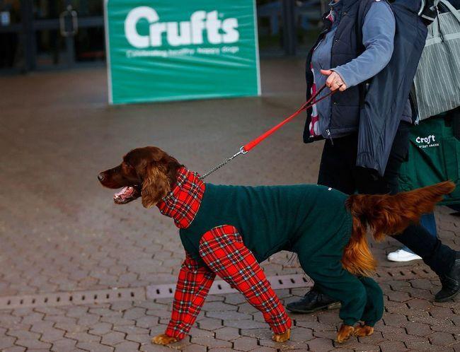 pasa Crufts Dog Show 2015