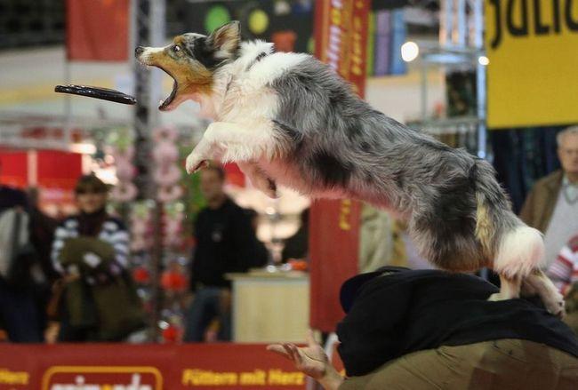 Izložba životinja Heimtiermesse Berlin 2012