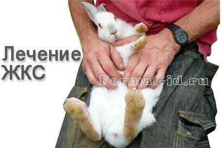 Желудочно-кишечный стаз у кроликов рентген