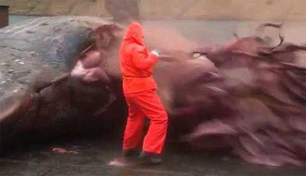 Взорвавшийся мертвый кашалот сильно напугал биолога
