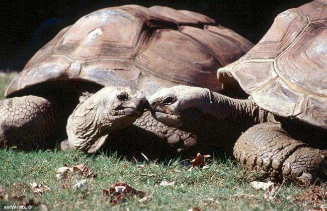 Galapagos kornjače pod nadzorom Google Street View.