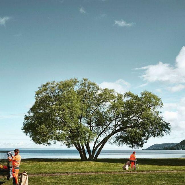 За инстаграмом дерева следят более 17 тысяч человек