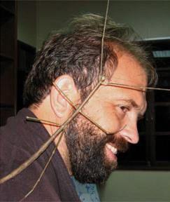 Самое длинное насекомое - палочник Phobaeticus chani
