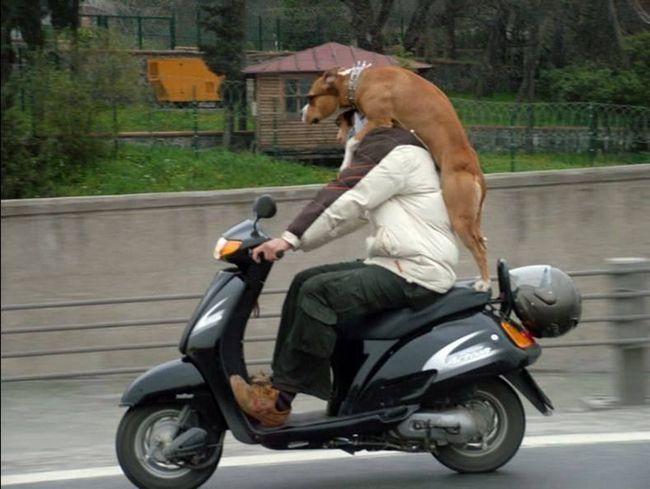 Smiješno mačke i njihovi prijatelji