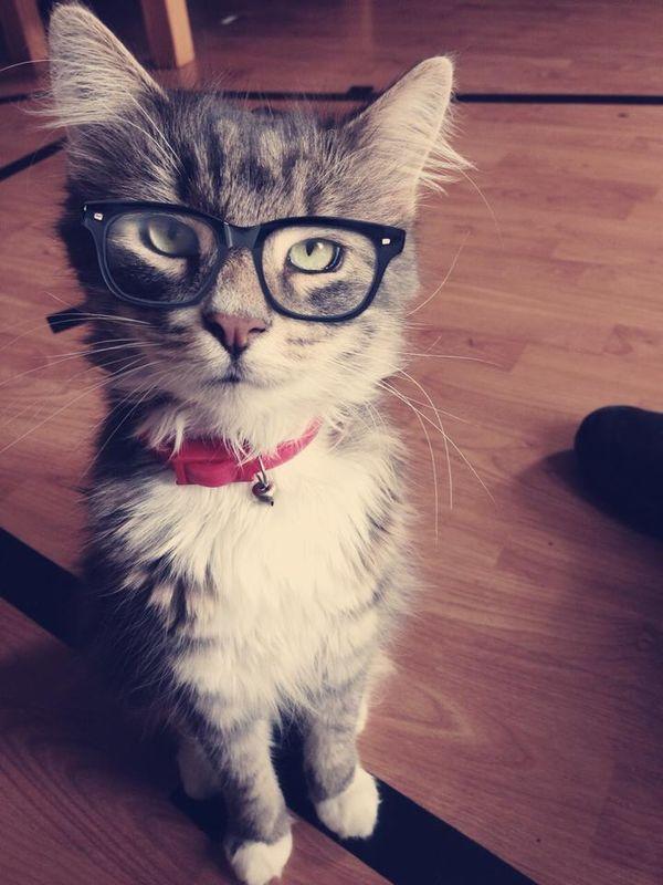 Забавные и странные научные исследования о котах и кошках